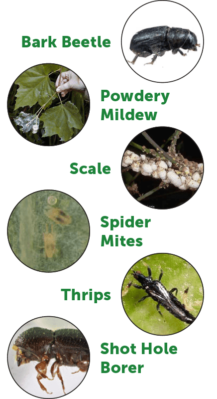 Different kinds of pests