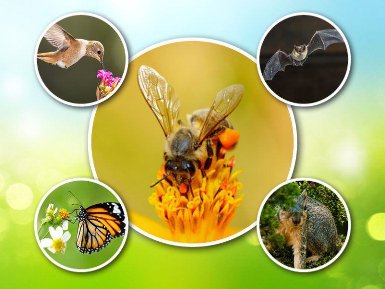 Collection of images including a hummingbird, bat, butterfly, bumble bee, and squirrel