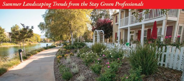 Summer landscaping trends from the Stay Green professionals