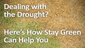 Dealing with the drought? Here's how Stay Green can help you