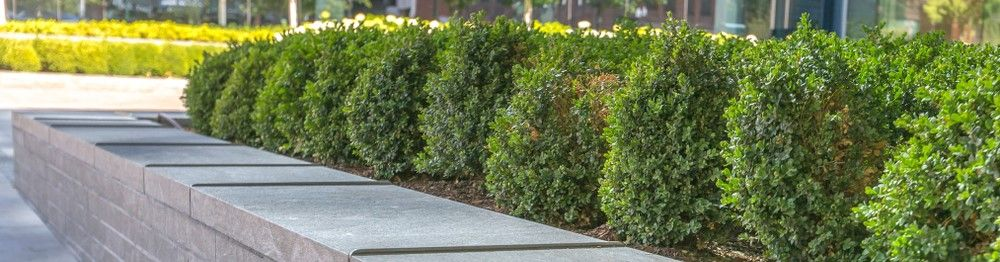 Costa Mesa Commercial Landscaping